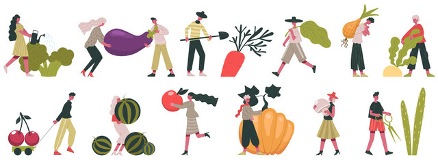 Harvesting vegetables. Fall harvesting, fruits and vegetables cultivation, people working on farm vector illustration. Gardeners with autumn harvest