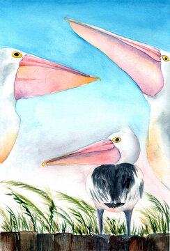 Colorful watercolor illustration of a pelican family standing on the fence withbeach grass on the blue sky background