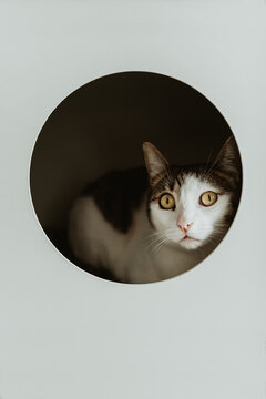Portrait of cute cat looking at camera inside a box