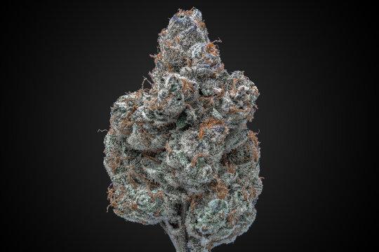 Cannabis Flower Macro - Strain: Chocolate Grape Diesel