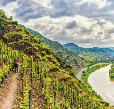 Wanderung durch den Weinberg über der Mosel bei Bremm (Calmont)