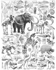 Obraz Paleontology - Jurassic period - animal fossils and skeletons collection - vintage illustration from Larousse du xxe siècle - fototapety do salonu