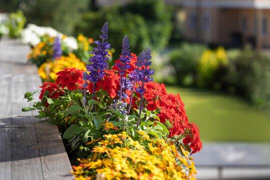 Bienenfreundliche Balkonblumen