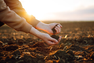 Fototapeta Farmer holding soil in hands close-up. Male hands touching soil on the field. Farmer is checking soil quality before sowing wheat. Agriculture, gardening or ecology concept obraz