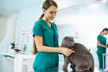 Obraz Young woman veterinarian examining cat on table in veterinary clinic. Specialist with stethoscope listen to kitten heart beat, patient lung. Medicine for domestic animal.  - fototapety do salonu