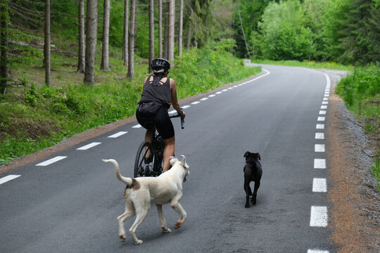 Road cyclist and two stray dog are riding along a beautiful mountain road through a pine forest