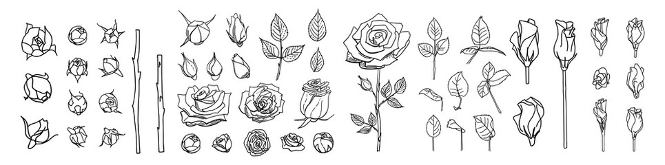 Obraz Big set of line roses and leaves. Rose bud illustration. Hand drawn flowers. Vector floral elements clipart. Perfect for decorations wedding cards, greeting cards, invitations. - fototapety do salonu