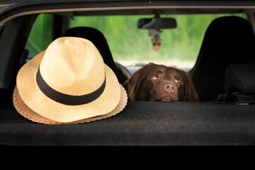 Obraz Pies w samochodzie  - fototapety do salonu