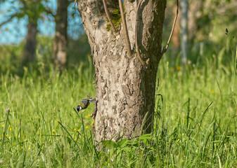 Fototapeta Ptak na pniu obraz