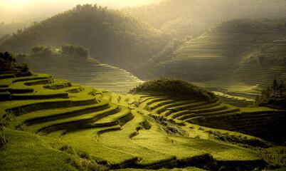 Terrace rice field at Sapa, Vietnam