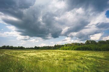 Duża trawiasta łąka, pastwisko w pochmurny dzień