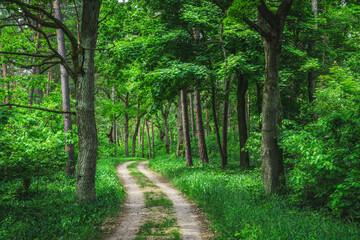 Obraz Leśna droga pomiędzy drzewami w Kampinoskim Parku Narodowym - fototapety do salonu