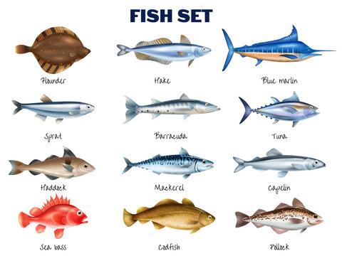 Sea Fish Set