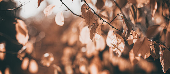 Soft focused Beautiful autumn scene with orange leaves and blurred brown branches. Falling leaves natural outdoor banner background design for social media, seasonal sale announcements. Vintage fall