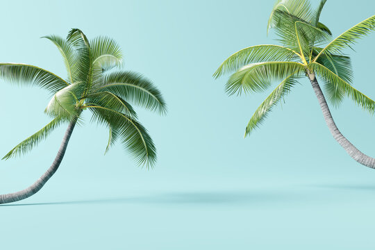 Tropical palm tree on pastel blue background. 3d rendering