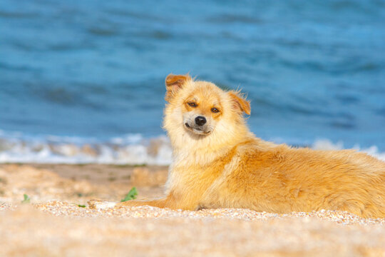Friendly stray dog lie on the beach.