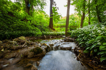 small river in green forest