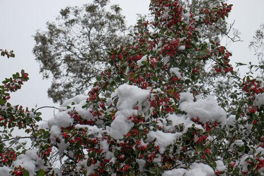 Paisajes cubiertos de nieve