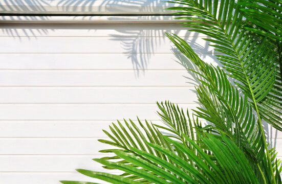 Creative tropical background with palm leaves on a white wooden wall. The shadow of the leaves falls on the wall. Perfect summer vacation background with copy space.