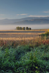 Obraz łąki, drzewa, pola o świcie, w porannej mgle. W tle góry - Karkonosze - fototapety do salonu