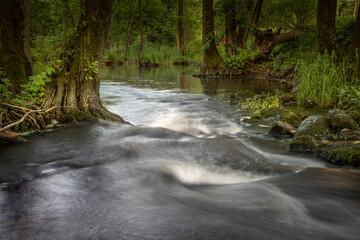 rzeka płynąca przez las