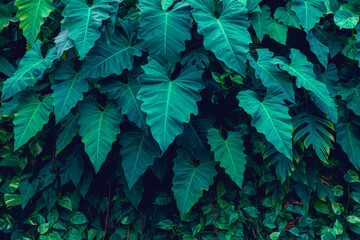 Full Frame of Tropical Leaves Texture Background. tropical leaf