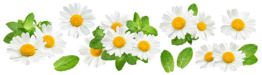 Camomile flowers and mint set isolated on white background