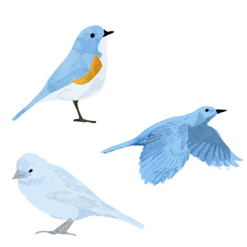 青い鳥の水彩ベクターイラストセット