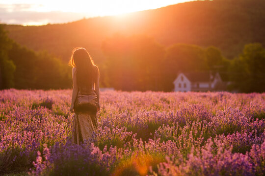 Anonymous woman in lavender field at sunset