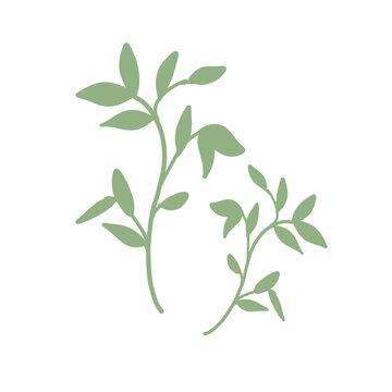 緑色の葉っぱ