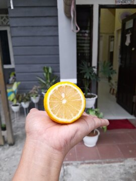 Lemon,fruit With Lots Of Benefits For Your Health And For Your Food