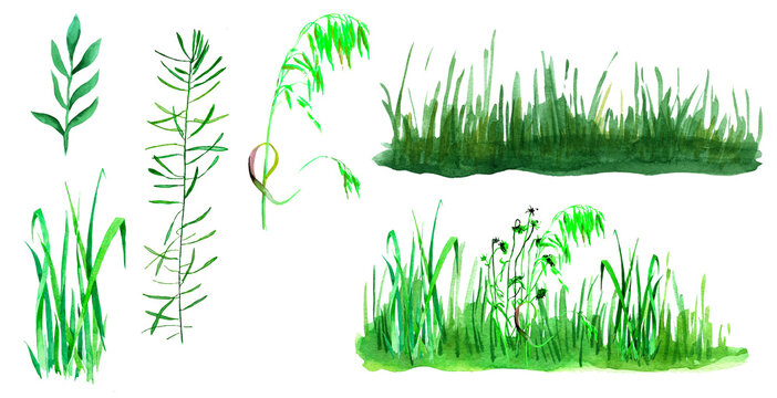 Grass watercolor isolated on white background set for all prints.