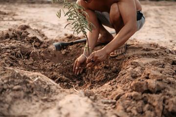 Fototapeta Man plants a small tamarind tree. Farm and argiculture at countryside concept. obraz