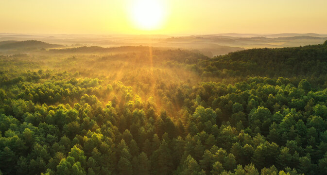 Beautiful morning light over the forest