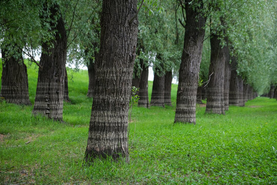 Water level is seen on the bark of the trees inside a previously flooded forest