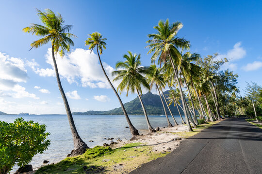 Palm trees along the road near Pofai Bay, Bora Bora, French Polynesia