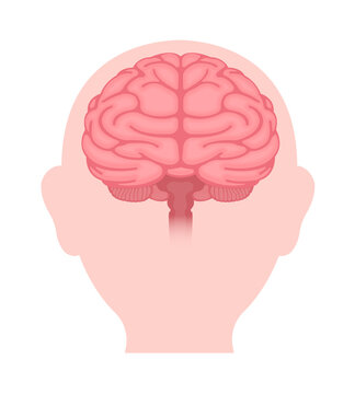 Vector illustration of human brain ( front view)