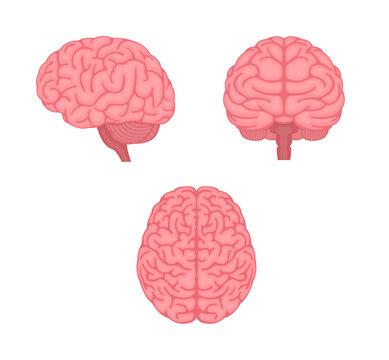 Vector illustration of human brain ( 3 angles set )