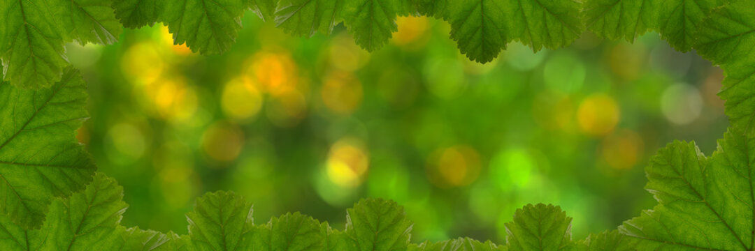 Mauve leaves frame banner, bokeh background with copy space. Various shades of green, warm spring colors