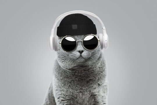Funny hipster cat with fashionable hat and vintage round sunglasses listens to music in white wireless headphones on gray background. Creative idea concept. Animal style