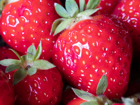 Close-up of Freshly Harvested Strawberries, Selected Focus