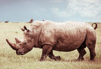 Selective focus shot of a rhino outdoors