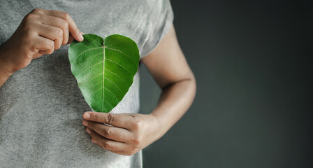 Fototapeta Green Energy, Renewable and Sustainable Resources. Environmental and Ecology Care Concept. Close up of Hand Holding a Heart Shape Green Leaf on Chest obraz