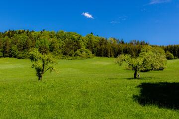 Obraz drzewa na polanie - fototapety do salonu