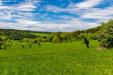 Fototapeta zielona łąka obraz