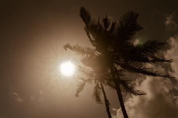 Fototapeta Tropikalny krajobraz, palmy kokosowe na tle nieba i słońca. obraz