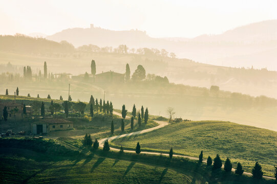 Italy, Tuscany, Val D'Orcia, Winding dirt road among cypresses at sunset
