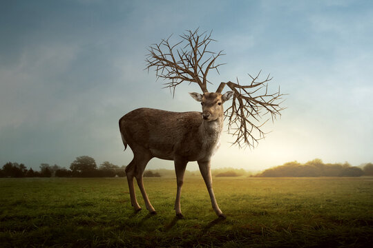 photo illustration of a deer with twig antlers. surreal photo manipulation