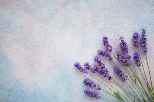Background with lavender flowers, bouquet, space for text, congratulations