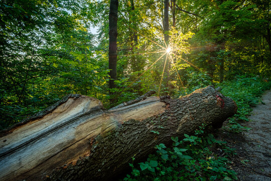 Sunstar in forest with old trunk on soil